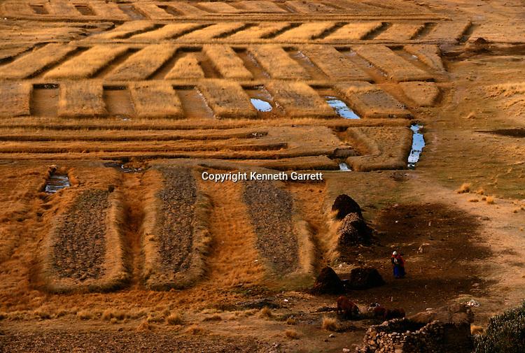 Bolivia; Tiwanaku; Raised Planting Beds; farming; ancient; irrigation; Lake Titicaca