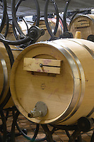 Fermentation in barrel. Oak barrel aging and fermentation cellar. Chateau Reignac, Bordeaux, France