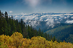 Idaho, North, Panhandle, Kootenai County, The Idaho Panhandle National Forest, Coeur d'Alene District. Autumn color and morning mist.