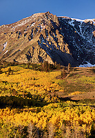 MOUNT WOOD towers above a stand of QUAKING ASPEN - PARKER BENCH, JUNE LAKE LOOP - SIERRA NEVADA, CA
