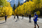 A crowd of tourists looking at the fall colors along the June Lake Loop, Inyo National Forest, California