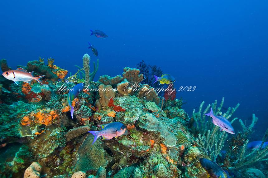 Underwater scenic at Seamount.St. Croix.US Virgin Islands