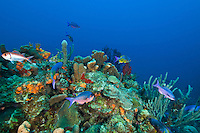 Underwater scenic at Seamount.St. Croix.US Virgin Islands