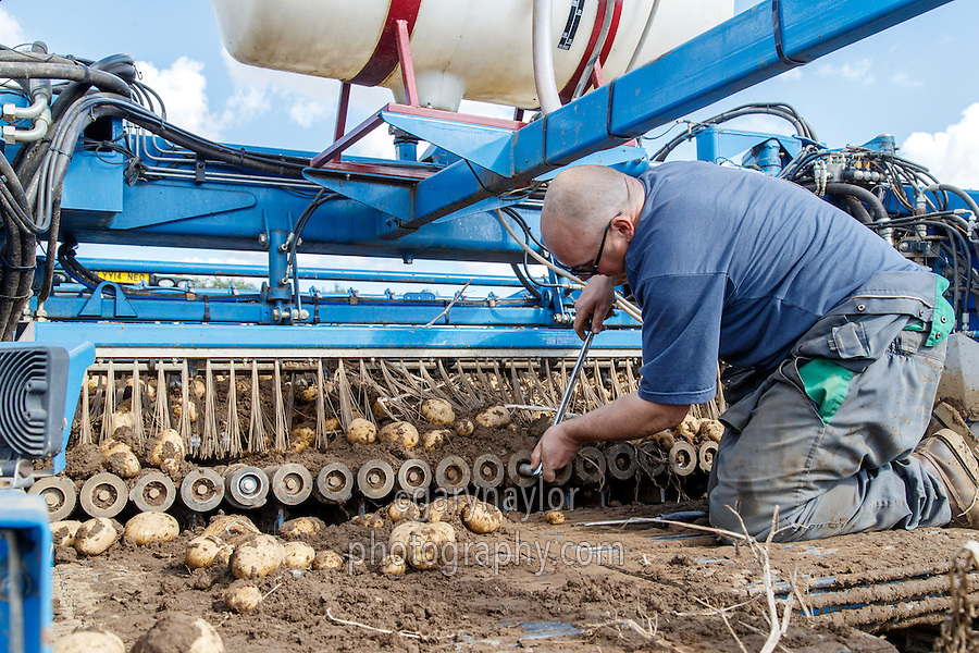 In field potato harvester repairs - Lincolnshire, September