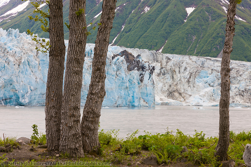 Childs glacier along the Copper River, southcentral, Alaska.