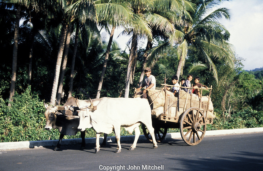 Smiling children riding an oxcart on a road in rural El Salvador, Central America