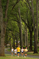 A group of runners jog down Queens Road West in the Myers Park neighborhood in Charlotte, NC. Myers Park is one of the premier neighborhoods in North America and known for its large canopy of trees. e