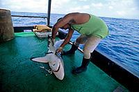 Long-line fisherman cutting fins from Oceanic Blacktip Shark, Carcharhinus limbatus, Cocos Island, Costa Rica - Pacific Ocean