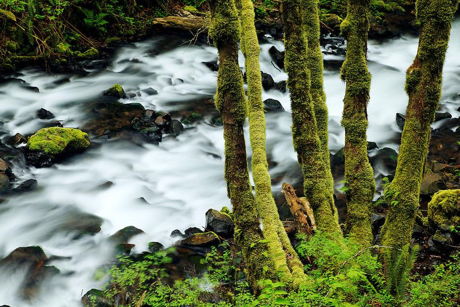 Bridal Veil Creek, Bridal Veil Falls State Park, Columbia River Gorge National Scenic Area, Oregon, USA