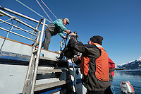 Dan Logan hands gear to John DeLapp from the M/V Auklet in Heather Bay in Prince William Sound, Southcentral Alaska on a sunny spring evening in early May.MR/PR