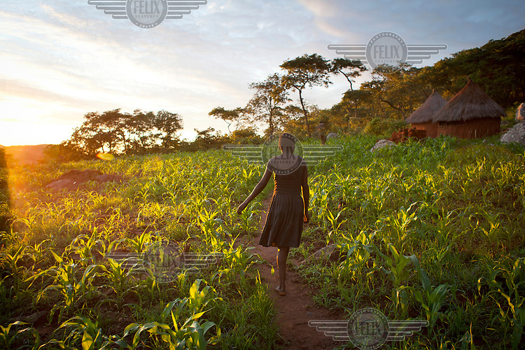 Liliosa Masora (16) walking through a field of maize plants at her home. Liliosa, who has a one year old baby, also looks after her younger sister Letwin who is 14 and HIV positive.