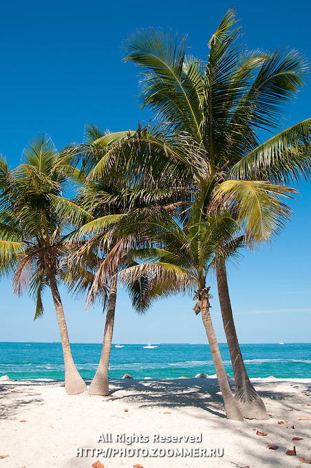 Two palm-trees on empty Zachary Taylor Beach, Key West, Florida