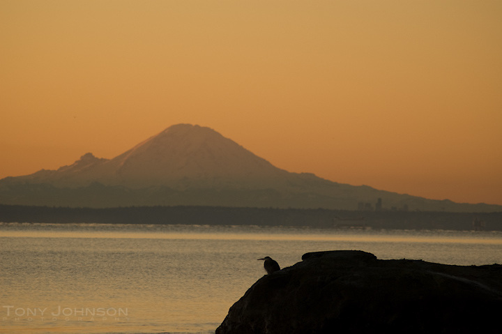 Puget Sound and Mount Rainier