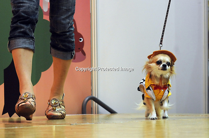 A miniature dog called Coo-chan wears a Woody from ToyStory outfit at the Osaka Pet Expo and fashion show, Osaka, Japan.<br /> 25-Sep-11<br /> <br /> Photo by Richard Jones