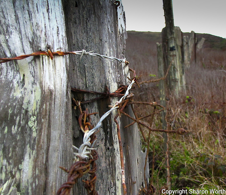Barbed wire, rusted, and wooden posts, weathered, mark the boundry along Highway 1 along California's coast.