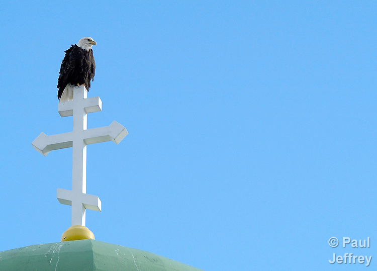 A bald eagle rests on the cross of the (Orthodox) Holy Ascension of Our Lord Cathedral in Unalaska, in the Aleutian Islands of Alaska.