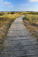 Boardwalk across the dunes at Holme Nature Reserve, Norfolk