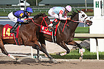 HALLANDALE BEACH, FL -DECEMBER 03:   #1 Chepstow (ON) with jockey Edgard Zayas  on board,  duels with # 14 Goodtimehadbyall (KY) to win the $110K  Claiming Crown Iron Horse Stakes  at Gulfstream Park on December 03, 2016 in Hallandale Beach, Florida. (Photo by Liz Lamont/Eclipse Sportswire/Getty Images)
