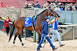 HOT SPRINGS, AR - APRIL 14: Oaklawn Handicap. Oaklawn Park on April 14, 2018 in Hot Springs,Arkansas. #2 Looking At Lee (Photo by Ted McClenning/Eclipse Sportswire/Getty Images)