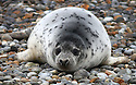 2013_01_05_NORFOLK_SEALS