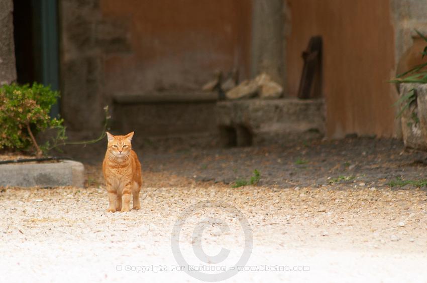 Prieure de St Jean de Bebian. Pezenas region. Languedoc. In the garden. France. Europe. The cat.