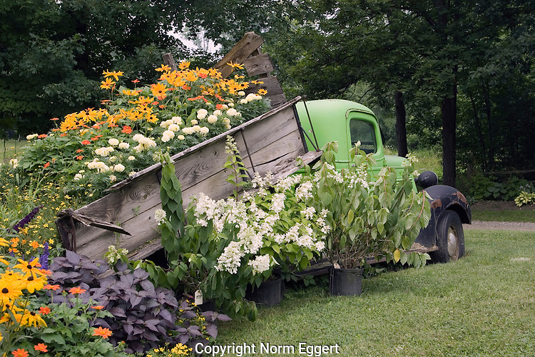 Old chevrolet truck with flowers in the back norm eggert for Classic house with flower garden