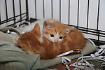 at the DAR cat rehomeing day<br /> Picture:  Fran Caffrey / www.newsfile.ie