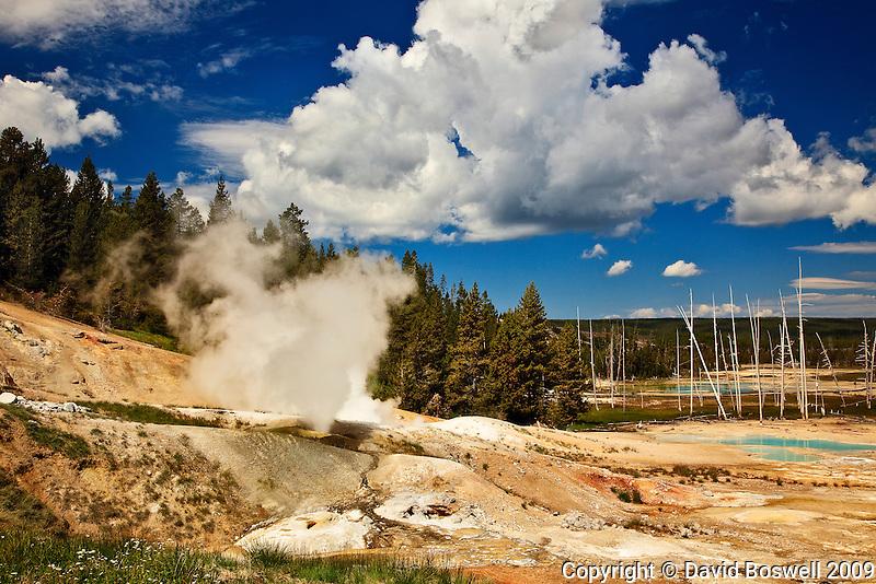 Fumaroles release steam in Norris Geyser Basin.