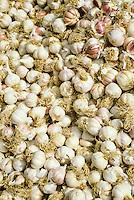 Tunis, Tunisia.  Garlic  in a Grocer's Bin, near Bab Souika.
