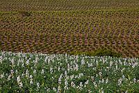 Madre Deus de Minas_MG, Brasil...Agricultura em Madre Deus de Minas, Minas Gerais...The agriculture in Madre Deus de Minas, Minas Gerais...Foto: LEO DRUMOND / NITRO