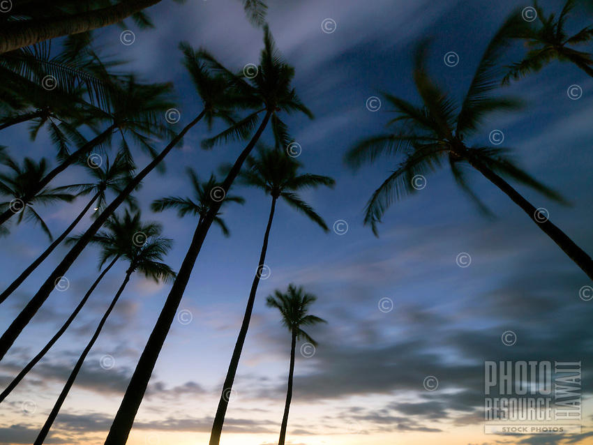 The rising moon peeks through the tops of silhouetted palm trees as clouds softly streak the twilit sky above 'Anaeho'omalu Bay, Waikoloa, Big Island.