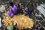 ETHIOPIA, Gambela, village Gog Dipach, maize harvest, family trash corn by hand / AETHIOPIEN, Gambela, Dorf GOG DIPACH der Ethnie ANUAK, Maisernte, Familie trennt Maiskoerner vom Kolben mit der Hand