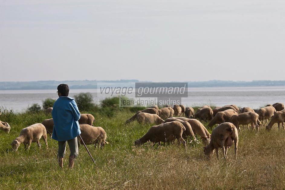 Europe/France/Aquitaine/33/Gironde/Saint-Yzans-de-Médoc: troupeau agneaux de Pauillac de Cedric Perez,