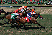 August 26, 2012. Magic School and Joel Rosario win an allowance race at Del Mar Thoroughbred Club in Del Mar, CA..