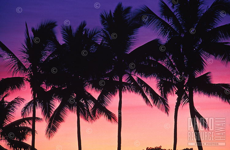 Vivid purple and pink skies create a perfect tropical backdrop for a stand of coconut palms in magnificent silhouette.