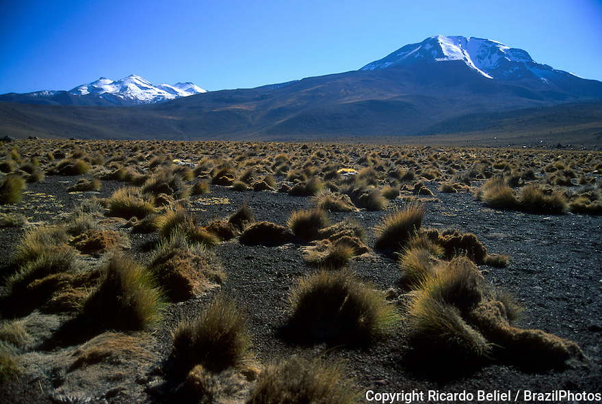 Vegetation. Ice on the top of the mountains. Atacama Desert, Chile, South America.