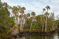 Coastal scenery near the towns of Weeki Wachee and Spring Hill in Hernando County, Florida