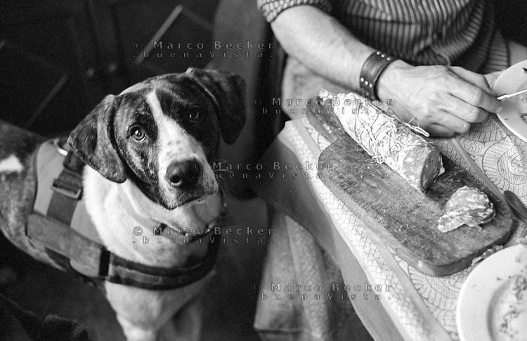 Un cane e un salame su tagliere a tavola --- A dog and a salami on cutting board on the table