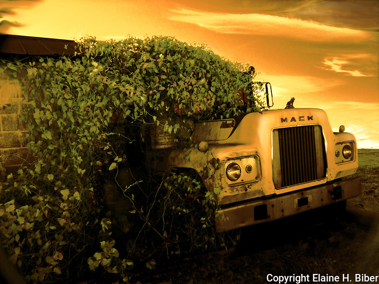 Old Mack truck with vines