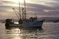 Fishing Boat mored  in the harbor, Monterey Bay, CA