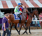 Dalmore (no. 3) in the Post Parade for the  Whitney Stakes (Grade I), Aug. 4, 2018 at the Saratoga Race Course, Saratoga Springs, NY.  Ridden by Ricardo Santana, Jr.  (Bruce Dudek/Eclipse Sportswire)