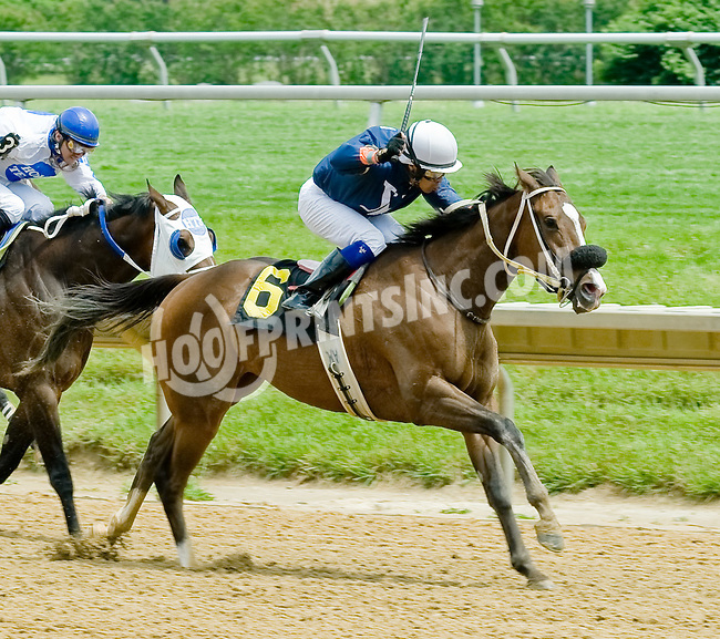Capital Fellow winning at Delaware Park on 6/2/12