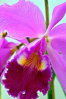 Orquídeas no Orquidário do Jardim Botânico. RJ. Foto de Luciana Whitaker.