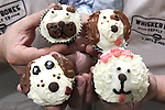 "Co-owners Perry Patten and Scott Tripp holds pupcakes, which are organic, healthy ""pupcakes"" topped with a dog-friendly icing. A variety of decorated faces - of various dog breeds - are applied to the tasty ""pupcakes""."