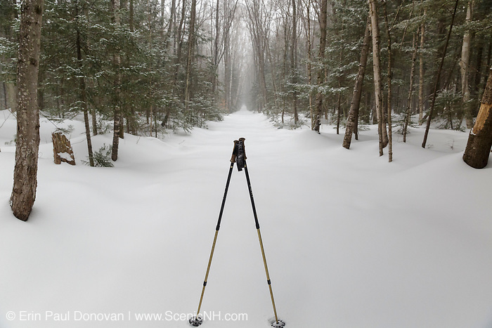 Lincoln Woods Trail during a winter day in the New Hampshire White Mountains. This trail utilizes the old railroad bed of the East Branch & Lincoln Railroad (1893 - 1948).