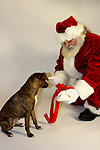 Santa Claus giving a bone Christmas present to a dog