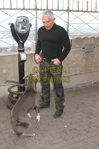 NEW YORK, NY - FEBRUARY 4:  World-renown dog behaviorist and TV personality Cesar Millan and his dog Junior visit the Empire State Building to promote the new season of the TV series 'Cesar 911' on National Geographic WILD in New York, New York on February 4, 2016. <br /> CAP/MPI/RMP<br /> &copy;RMP/MPI/Capital Pictures