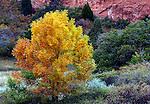 October 2009:  Autumn colors in the Garden of the Gods, Colorado Springs, Colorado