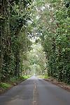 The Tree Tunnel on the road to Po'ipu, Kauai Hawaii