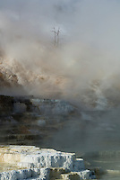 Dense steam, helped by cold winter air, nearly obscures Palette Spring -Mammoth Hot Springs